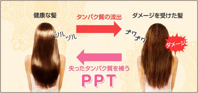 タンパク質 髪の毛